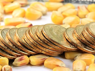 Establishing a Commodity Risk Management Program